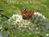 farfalla-su-fiori