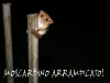 moscardino-arrampicato